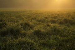 Morning meadow. Meawdow in the morning sunrise stock images