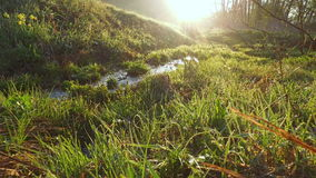 Morning meadow in the rays of the sun. Sunrise over spring green meadow. Water drops glisten on the grass. A stream with clear wat stock footage
