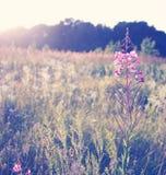 Morning  meadow Stock Photos
