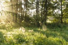 Morning on meadows Royalty Free Stock Photos