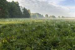 Morning on meadows Stock Image