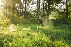 Morning on meadows Stock Photo