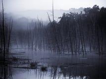 Morning Mist Stock Image