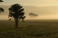 Morning Mist. Early morning mist in field and hills with lone trees Royalty Free Stock Photography