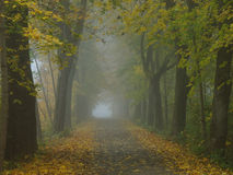 Mystic alley at fall by mist. Tree-lined alley with fallen leaves on the ground. Misty in the morning. German nature at fall Stock Photo