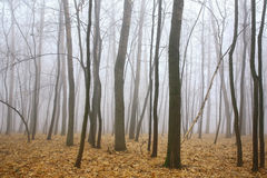 Morning mist autumn forest Royalty Free Stock Image