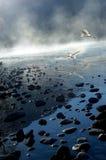 Morning mist birds Royalty Free Stock Image