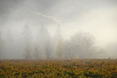 Morning mist and California Vineyard Royalty Free Stock Image