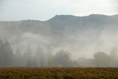 Morning mist and California Vineyard Stock Image