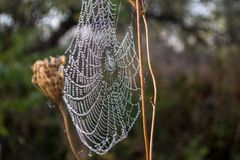 Morning mist and cobwebs. On the grass Royalty Free Stock Photography