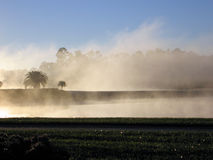 Morning Mist on the Course. Original photo of early morning mist on a Florida golf course Royalty Free Stock Images