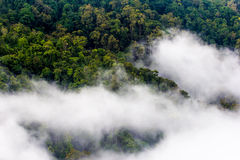 Morning mist cover pine tree forest, Thailand Stock Photography
