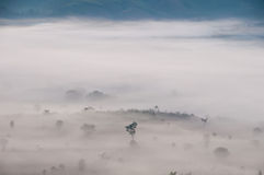 Morning mist cover tree and mountain Stock Photos