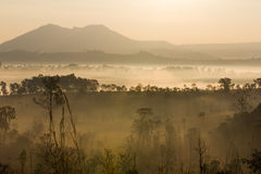 Morning mist cover tree and mountain Royalty Free Stock Photos