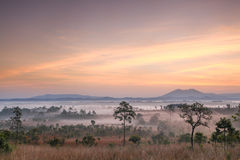Morning mist cover tree and mountain. Thailand Royalty Free Stock Photography