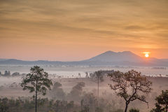 Morning mist cover tree and mountain Stock Photography