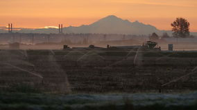 Morning Mist, Cranberry Field stock video footage