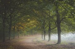 Morning mist creeping in under the foliage on to path at the Amerongse Bos with autumn leaves catching the first sunlight of the stock photography