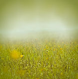 Morning mist and dew on grass and flowers Royalty Free Stock Photo