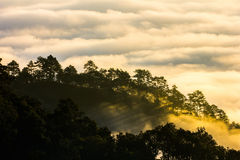 Morning mist on doi angkhang mountain, Chiang Mai, Thailand. Stock Photos