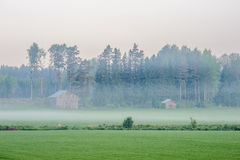 Morning mist royalty free stock images