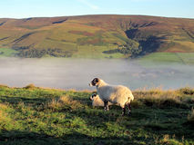 Morning mist in Edale valley. Royalty Free Stock Photography