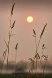 Morning Mist on the Farm Stock Photography