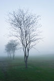 In the morning with mist. Feeling lonely Royalty Free Stock Images