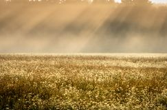 Morning Mist in Field Pastels With Slanted Sunrays stock images