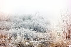 Morning mist fog and hoarfrost - hoar on tree and bush, winter landscape. Morning mist fog and hoarfrost - hoar on tree and bush, beautiful winter landscape Royalty Free Stock Image
