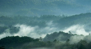 Morning mist in forest Stock Photo