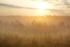 Morning mist in forest at dawn. The silhouettes of the trees in the fog at the background of the rising sun Royalty Free Stock Photos