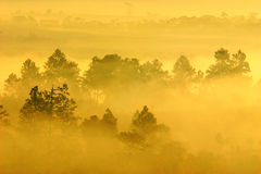 Morning mist and forestry Royalty Free Stock Photos