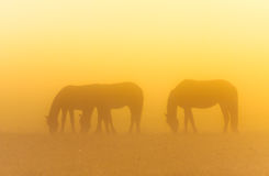 Morning mist with horses Stock Photo