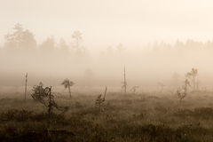 Morning mist. Is illuminated by the rising sun on a peat bog Stock Images
