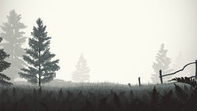 Morning mist illustration. Morning mist on the field with firs Royalty Free Stock Photos