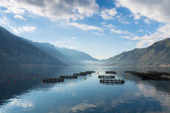 Morning mist on Kotor bay. Cage aquaculture on Boka Kotorska in Montenegro Royalty Free Stock Photography