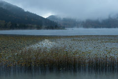 Morning mist. On Lake Abant, Bolu, Turkey Stock Photo