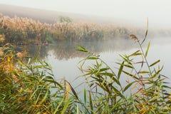 Morning mist on lake Royalty Free Stock Photo