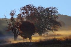 Morning mist landscape. At Saint Anne lake in Transylvania, Romania Royalty Free Stock Photos