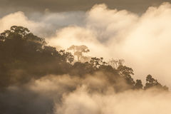 Morning mist with light. Stock Image