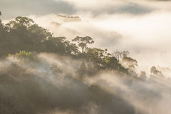 Morning mist with light. Royalty Free Stock Photos