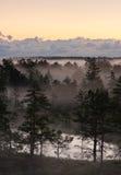 Morning mist in a marsh in Estonia royalty free stock photo