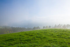 In the morning mist on a meadow Stock Photo