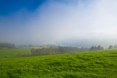 In the morning mist on a meadow Stock Images
