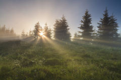 Morning mist on  meadow Stock Photo