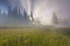 Morning mist on  meadow Stock Image