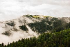 Morning mist. In the mountins Royalty Free Stock Image