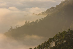 Morning mist and mountain. Chiang mai,thailand Stock Image