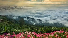 Morning Mist with Mountain ,sea of mis.  Royalty Free Stock Images